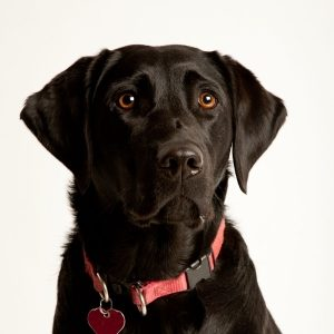 bad dog breath removal